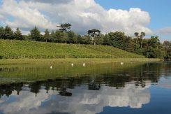 Vineyard, Painshill Park, Cobham