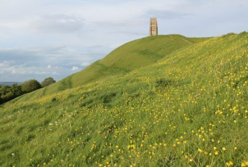 Buttercups, Glastonbury Tor, Glastonbury