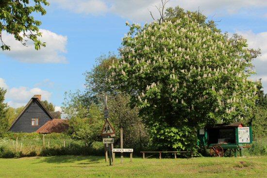 Church Farm cart, under horse chestnut tree, Ardeley