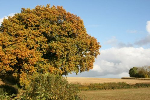 Countryside, near Rockbourne