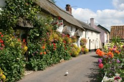 Dove by thatched cottages, Church Row, Branscombe