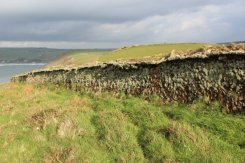 Lichen wall, path to Woolacombe from Baggy Point