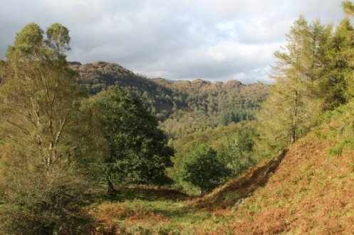 Low Yewdale, Monk Coniston Estate, Tarn Hows