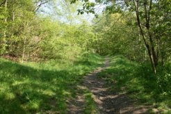 Path leading to the top of reclaimed coal slag heap, Central Forest Park, Hanley, Stoke-on-Trent