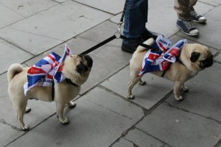 Patriotic pug dogs, Queen's Diamond Jubilee, Thames Pageant