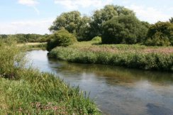 River Frome, Wool