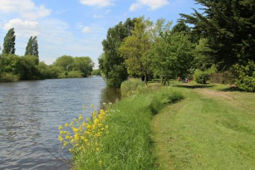 River Thames, between Shepperton and Chertsey