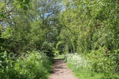 Thames Path, between Shepperton and Chertsey