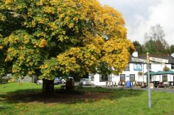 The Britannia Inn and Maple Tree, Elterwater