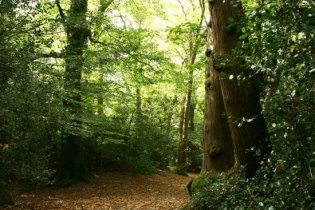 Thorncombe Wood, pathway leading to Thomas Hardy's Cottage, Higher Bockhampton