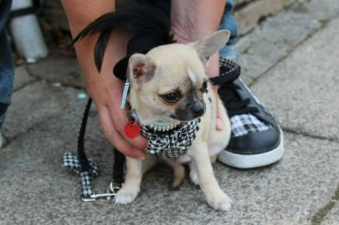 Top Hat dog, Bridport Hat Festival, 2012, Bridport