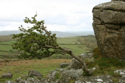 Top of Sharp Tor, Dartmoor