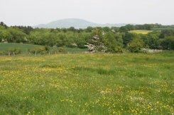 Wenlock Edge, near Much Wenlock