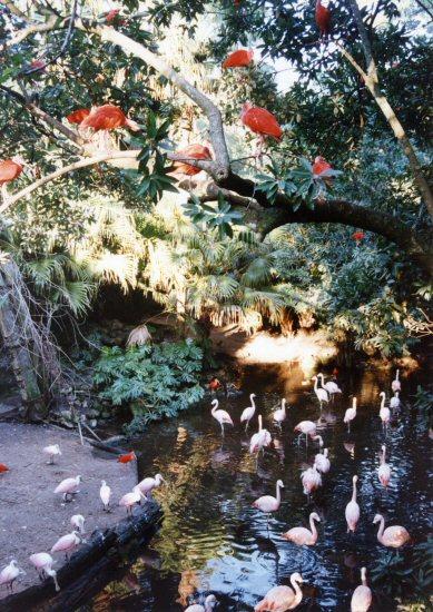Discovery Island, Disney World, Florida