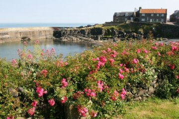 Harbour, Craster