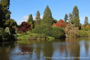 Upper Woman's Way Pond, Sheffield Park Garden