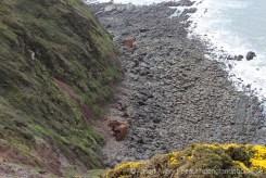 Wreck of Johanna, Hartland Point