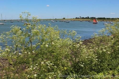 Meadway Estuary, Lower Halstow