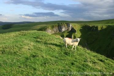 Sheep above Winnats Pass, Castleton, High Peak