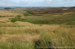 Haworth Moor