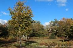 Ancient Woodland, Burnham Beeches