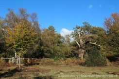 Ancient Woodland, Burnham Beeches