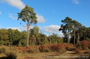 Path through woods, Burnham Beeches