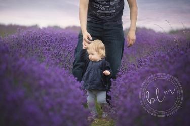 lavender-fields-banstead