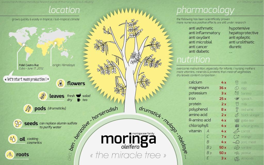 moringa infographic