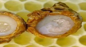 فيتامينات الغذاء النحل