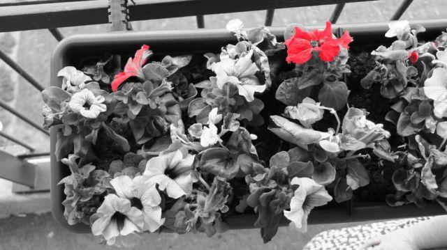 bloembak