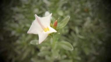 tuin bloem