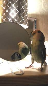 vriendje spiegel