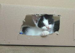 marie kijkt door raam kartonnen doos