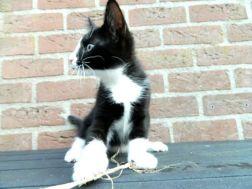 toulouse speelt met touwtje