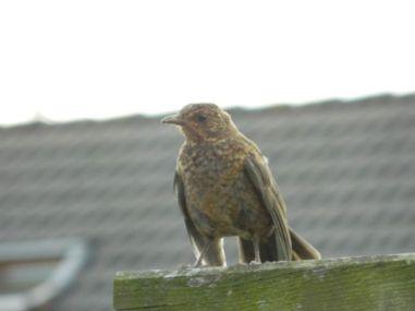 vogel 2