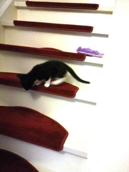 trap ontdekt