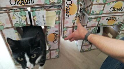 katten flat diy
