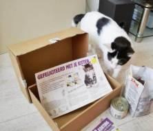 ECOstyle Kittenpakket (10)