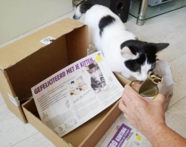 ECOstyle Kittenpakket (11)