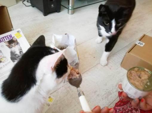 ECOstyle Kittenpakket (13)