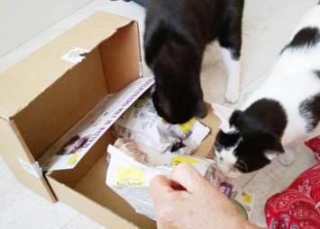 ECOstyle Kittenpakket (8)