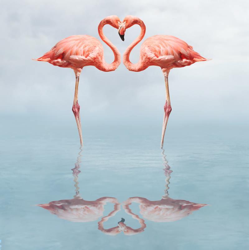 Flamingo's kissing heart shape