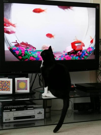 toulouse tv movies for cats 4