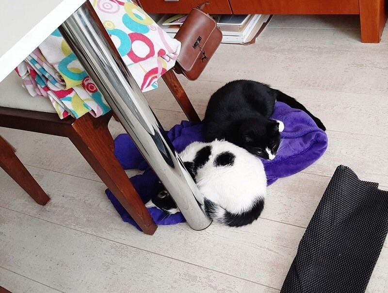 KeeK op de WeeK 43- Kat in de Stad & Chagrijnig van de Griep 25 kat KeeK op de WeeK 43- Kat in de Stad & Chagrijnig van de Griep