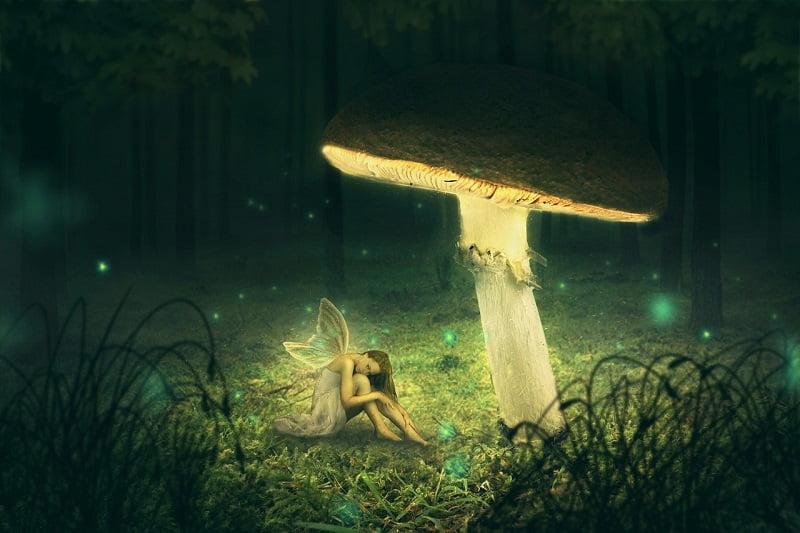 Welke Paddenstoel Supplementen zijn er en wat kunnen Zij voor Jou betekenen? 11 paddenstoelen Welke Paddenstoel Supplementen zijn er en wat kunnen Zij voor Jou betekenen?
