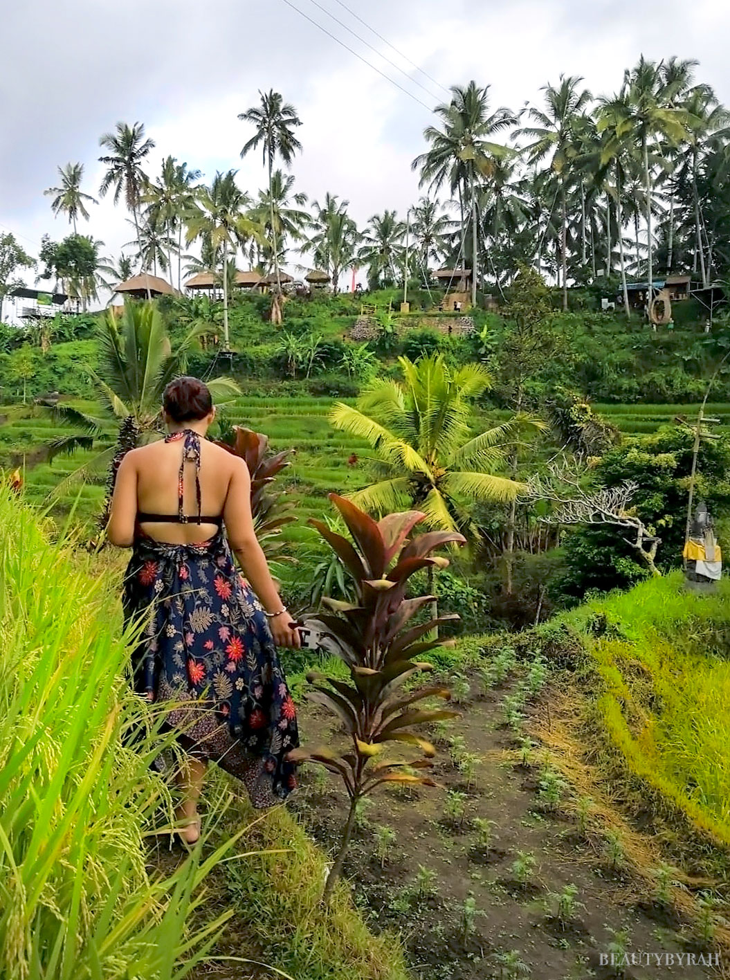Tegalalang Rice Terraces Ubud Bali Guide
