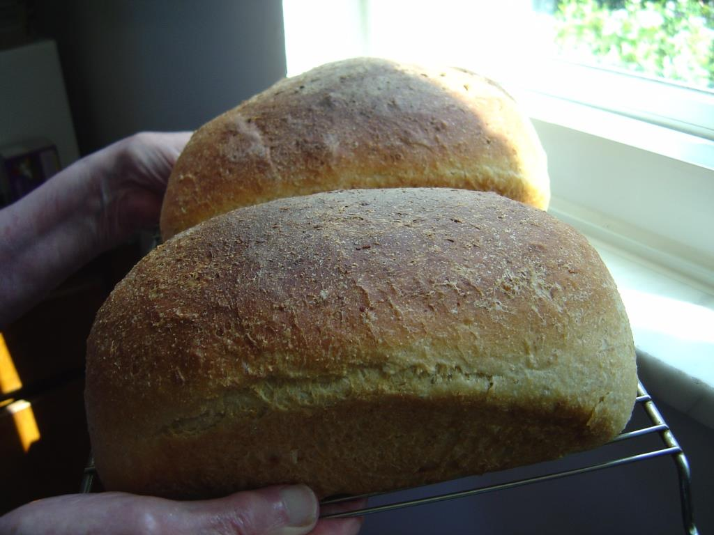 Golden Cornmeal Yeast Bread