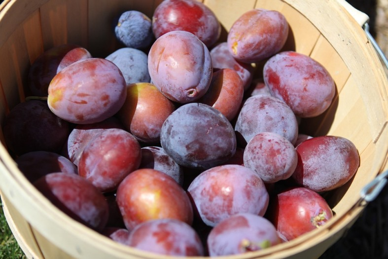 the power of plums for bone strength