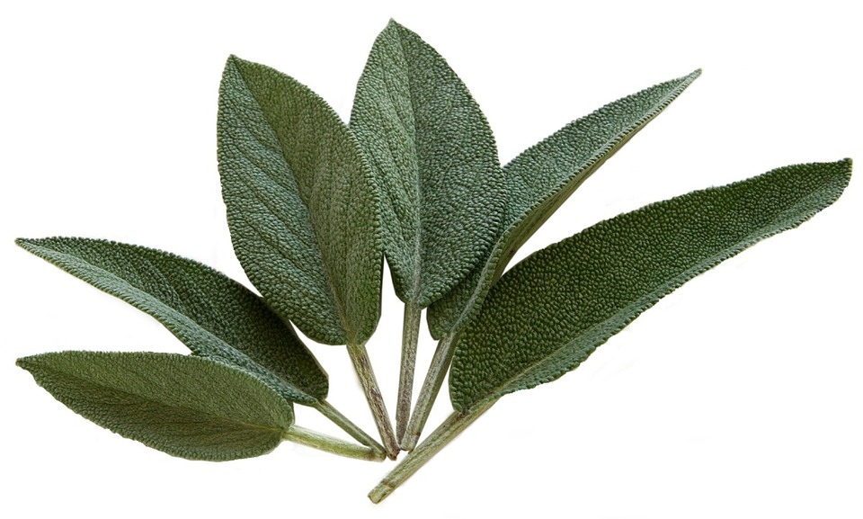 9 Powerful Herbs for Cooking, Health and Beauty Sage Pixabay Image